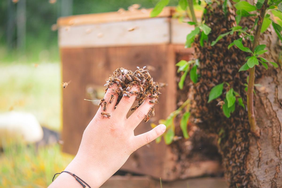 apiculture douce