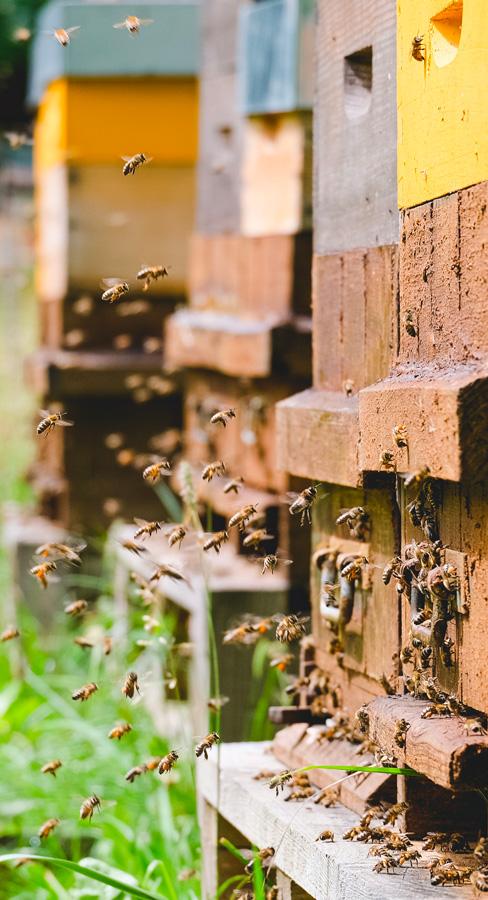 photo ruche trappe libre arbitre